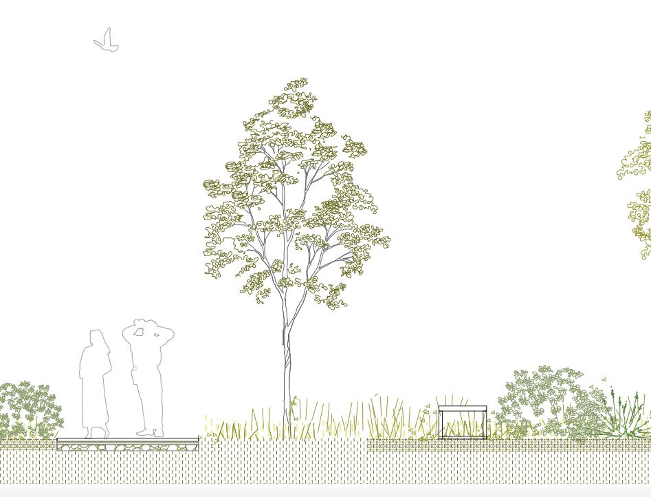 Consulenza botanica nella progettazione di parchi e giardini