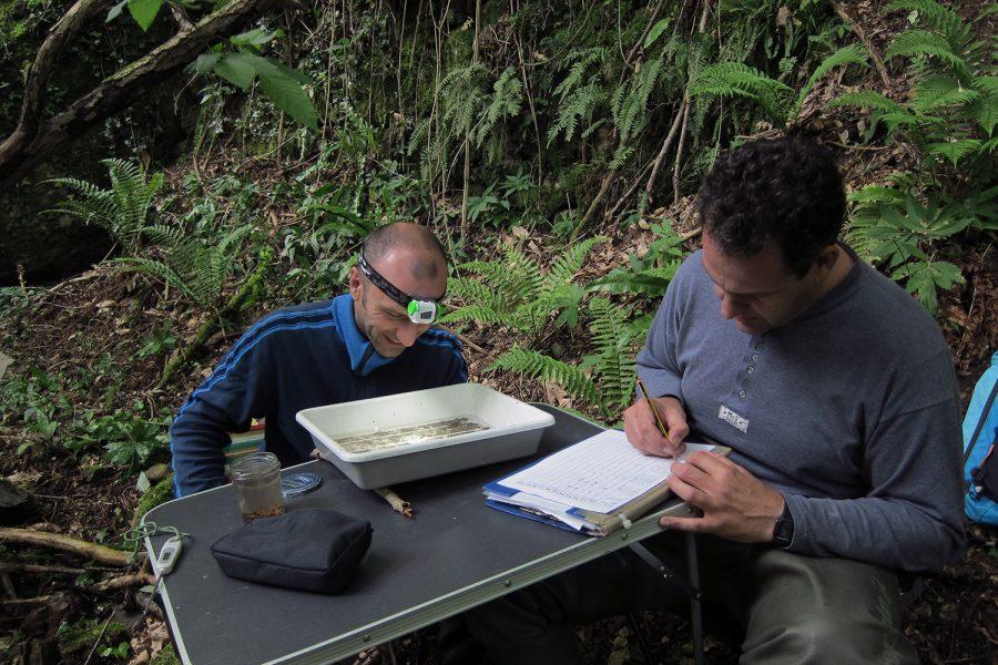 Monitoraggio dei macroinvertebrati acquatici (Star ICMi)