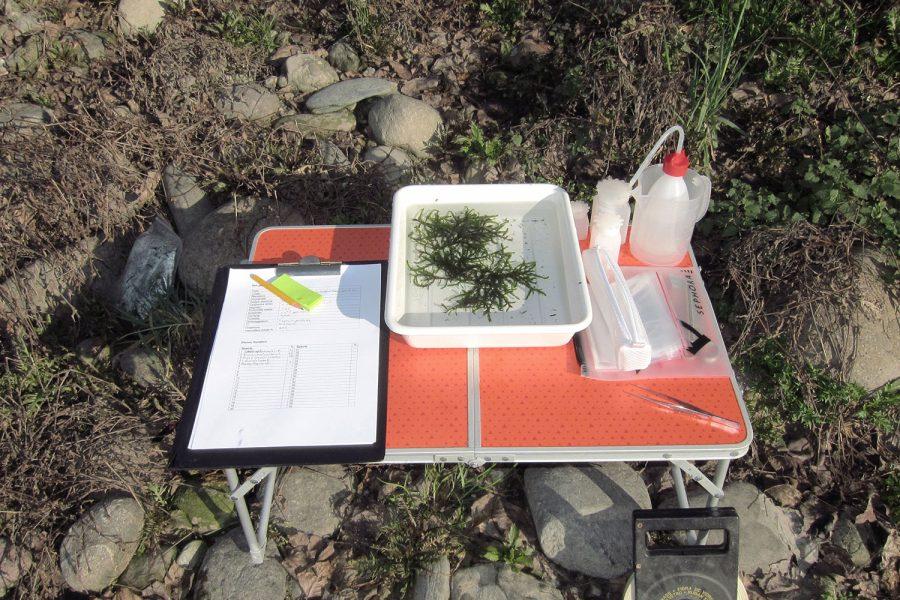 Monitoraggio delle macrofite acquatiche (IBMR)