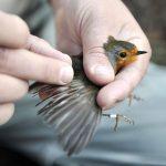 Monitoraggio dell'avifauna