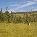 Gestione e progettazione di aree protette